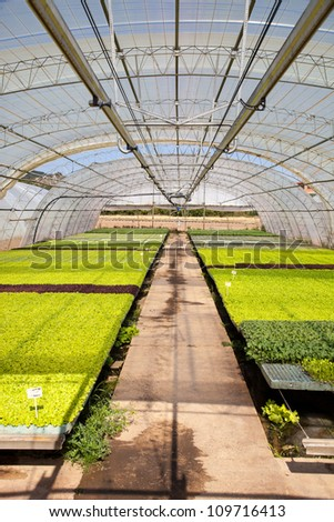Greenhouse for the cultivation of vegetables