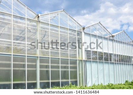 Greenhouse from glass with green organic plants on the summer background. Industrial green house for cultivating ecological vegetables. Cultivate agricultural plant. Glasshouse for growing veggies  #1411636484