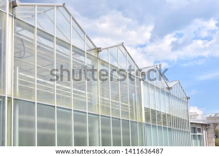 Greenhouse from glass with green organic plants on the summer background. Industrial green house for cultivating ecological vegetables. Cultivate agricultural plant. Glasshouse for growing veggies  #1411636487