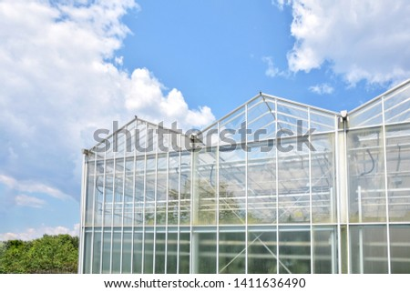 Greenhouse from glass with green organic plants on the summer background. Industrial green house for cultivating ecological vegetables. Cultivate agricultural plant. Glasshouse for growing veggies  #1411636490