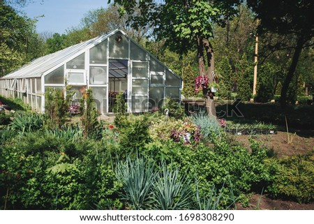 greenhouse growing flowers in a greenhouse Stock photo ©