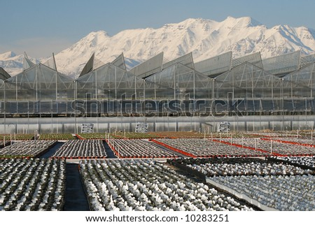 Greenhouse in Utah with snow covered Timpanogos Mountain in the background.