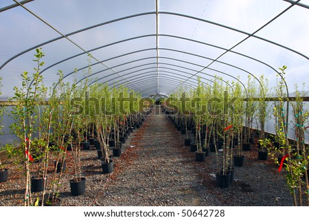 Greenhouse nursery.
