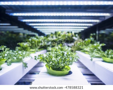 Greenhouse Plant row Grow with LED Light Indoor Farm Agriculture Technology