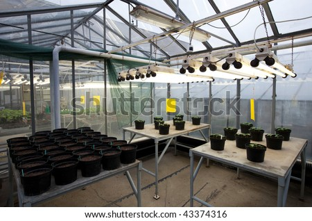 greenhouse series inside a greenhouse young plants. Black Bedroom Furniture Sets. Home Design Ideas