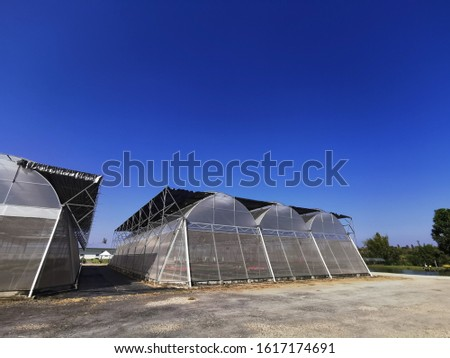 Greenhouses for cultivating plants and blue skies