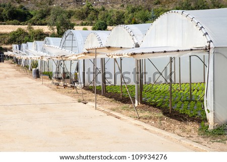 Greenhouses for growing vegetables and pulses