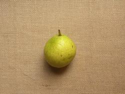 Greenish yellow color ripe whole fresh Nakh pear