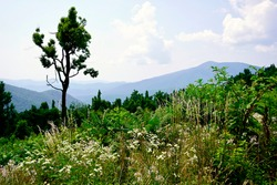 Greenstone Overlook on Blue Ridge Parkway in Virginia. Wildflowers and pine trees in foreground and mountain peaks and ridges in the background.