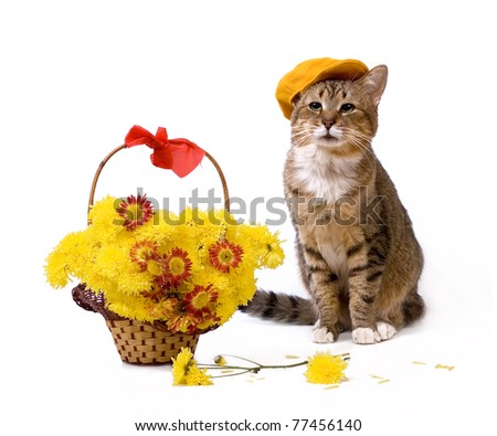 Greeting card with cat wearing peaked near flower basket isolated on white