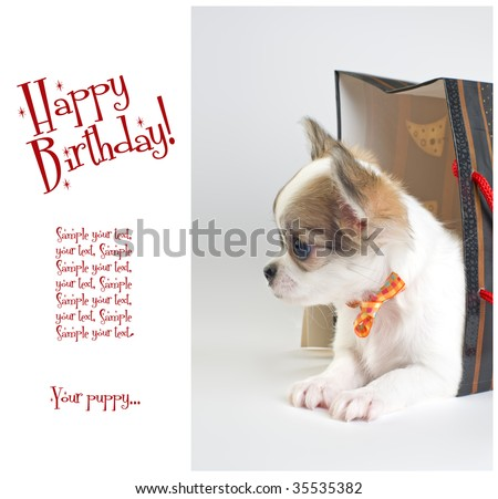 greeting card with cute chihuahua puppy in the gift bag