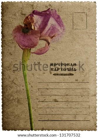 Greeting card with iris flower