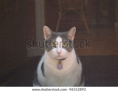 Grey and White House Cat behind Screen Door