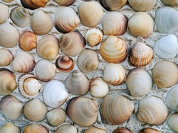 Grey, beige, brown polished venus seashells on cement wall. natural decorative seashells background. Relaxing decor. Summer vacation memories.