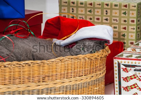 Grey Cat in Basket at Christmas Time with the Presents