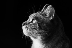 grey cat in direct sunlight on black background