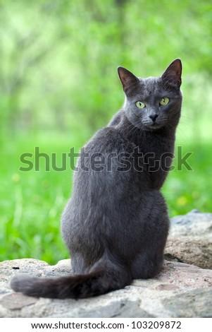 grey cat is enjoying nature
