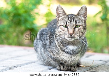 grey cat is sitting on paved road and looking at camera