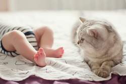 grey cat lying near baby boy