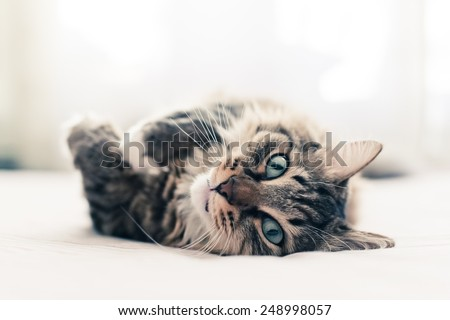 Grey cat lying on bed #248998057