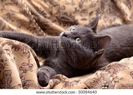 grey cat lying on gobelin