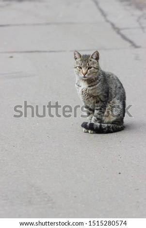 Grey cat on grey asphalt #1515280574