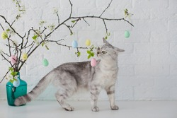 Grey cat playing with small Easter eggs. Easter tree in blue vase with colorful eggs on a white background