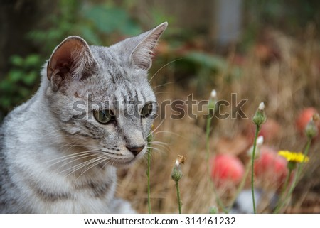 Grey cat sitting in the grass among the apples