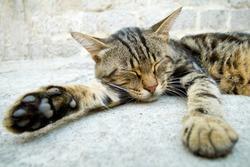 Grey cat sleeping in the street