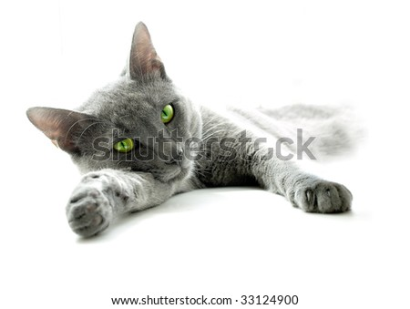 Grey cat with yellow-green eyes, lying on sun