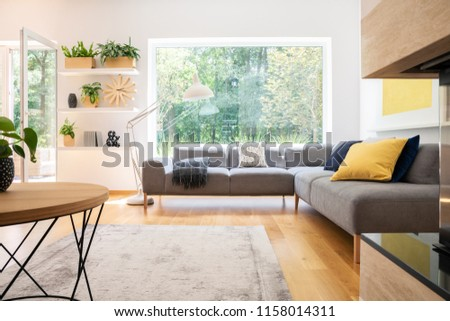 Grey corner couch with cushions in real photo of white living room interior with window, fresh plants, carpet and big lamp