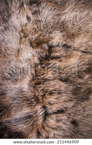 Grey Dark Brown Fur Natural Wolf Fox Animal Mountain Wildlife Concept And