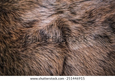 Grey, Dark Brown Wolf Fox Fur Natural, Animal Mountain Wildlife / Concept and Style for Background, textures and wallpaper, close up full frame.