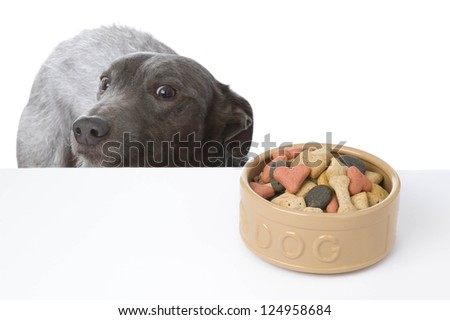 grey dog looking longingly at a bowl of food