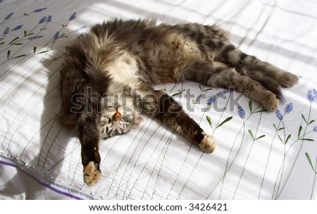 Grey domestic cat sleeping on a bed