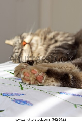 Grey domestic cat sleeping on a bed (shallow depth of field)