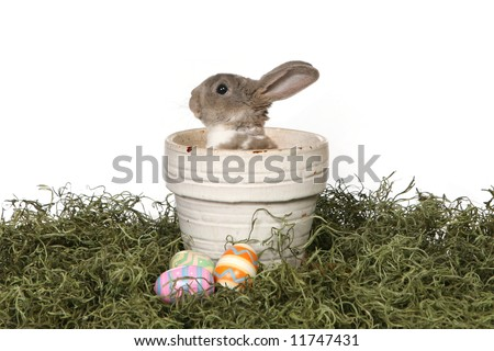 Grey Easter Rabbit Bunny in Panter Isolated on White - stock photo