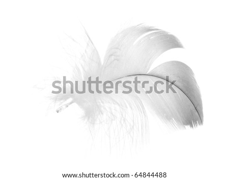grey feather isolated on white background