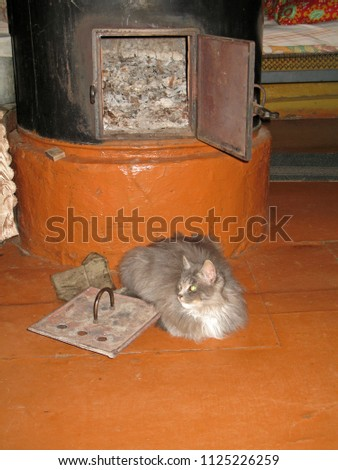 grey furry cat is heated on the ...