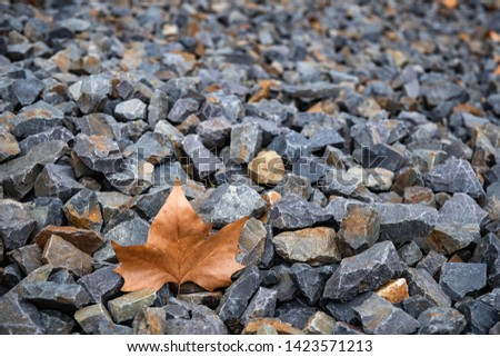 Grey granite pieces gravel texture with defocused brown maple leaf. Rough stone background. Grunge backdrop with textured pebbles and lonely autumn leaf. #1423571213