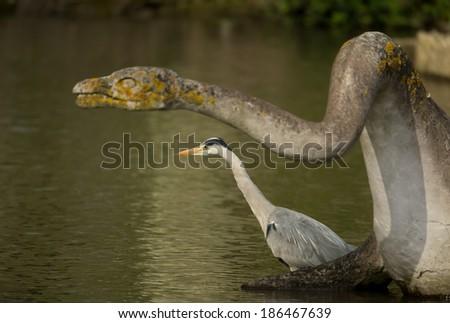 Grey Heron (Ardea cinerea) standing in water under a head of a dinosaur, UK