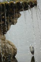 Grey heron by a fountain