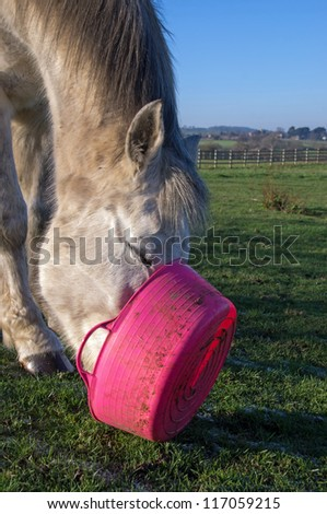Grey horse determined to get every bit of food