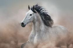 Grey horse in motion on desert dust