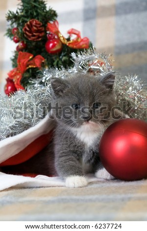 grey kitten, christmas tree and decorations