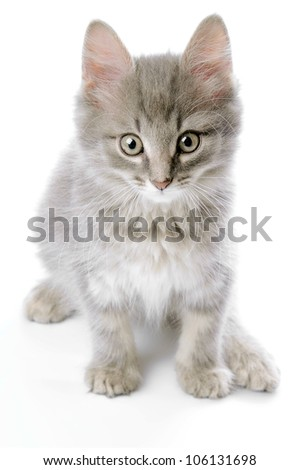 Grey kitten closeup - stock photo