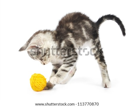 Grey kitten playing with yellow clew  isolated on white background