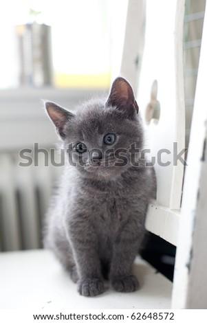 grey kitten sitting on a chair