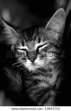 Grey kitten sleeping