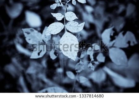 Grey Leaves Background #1337814680
